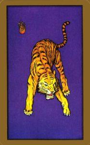 interprétation de la carte tarologique du tigre